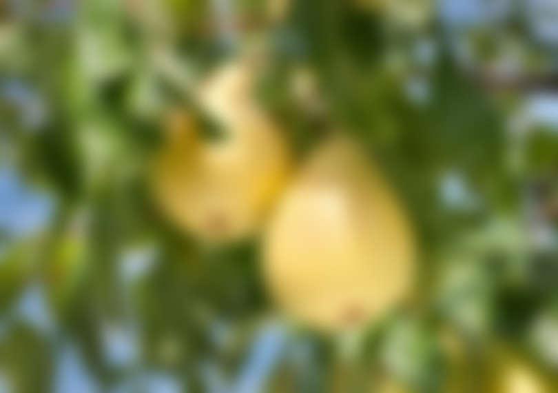 pic030