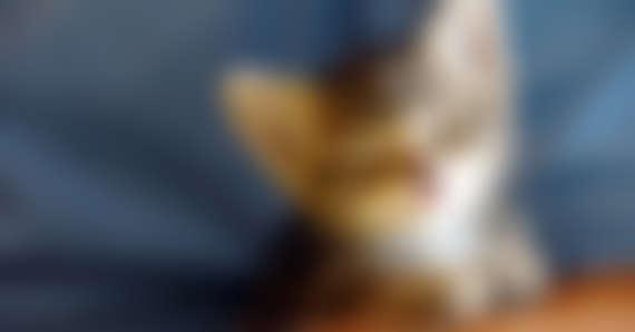 Feeding a Kitten: Kitten Food Types & Schedule