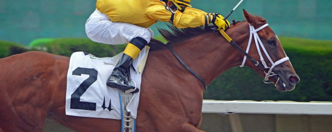 Australian Equestrian Brands