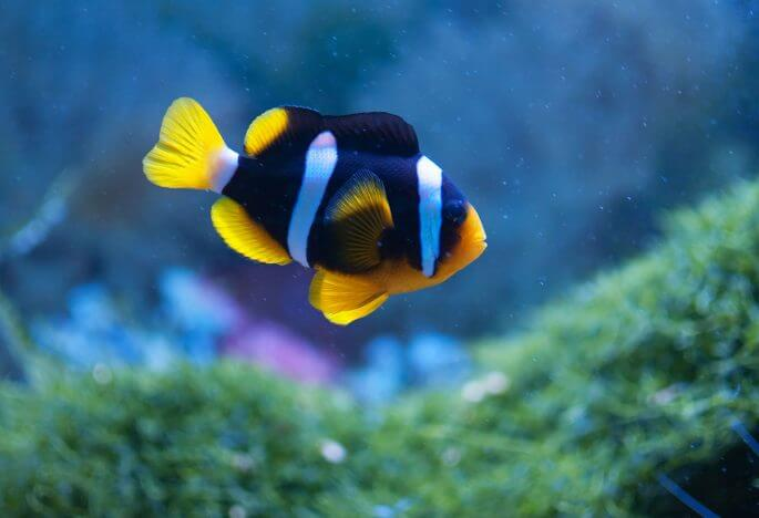 How To Move A Fish Tank: Your Step-By-Step Guide