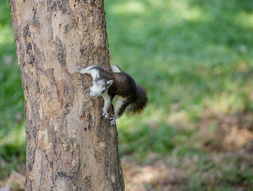 Squirrel Fights With a Chipmunk!