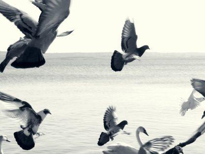 City birds smarter than rural ones