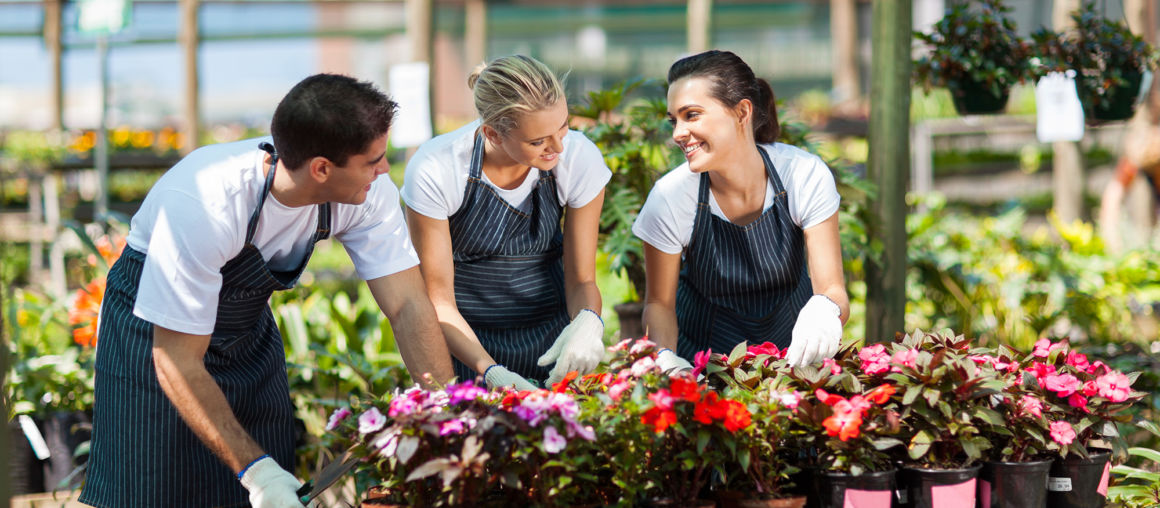 Flowers in your garden. The best sorts of flowers for outdoors.